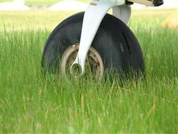 Beware the hazards of long grass