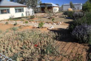 With average temps on the wrong side of scorching all summer, gardening is a constant challenge.