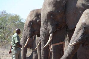 An African queue