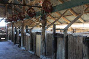 Beautiful hundred year old shearing shed at Mungo.