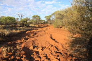 Ancient waterways carve paths all through Wooleen.