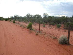 The Dog Fence, just down the road, is 5,614kms long and works really well except where the dingoes find the holes in it