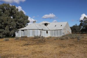 The old shearing shed you can walk to from the campsite.