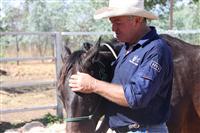 Resident horse whisperer, John Rodney