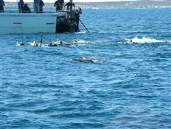 Swimming with the whaleshark (foreground)