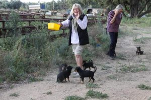Guest Suzie goes dancing with the puppies on Trilby.
