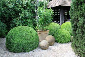Musk garden (4)