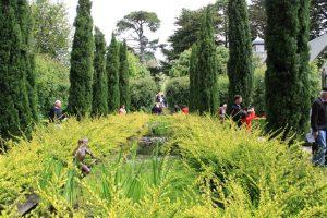 Musk garden (5)