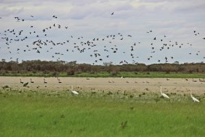 Beautiful birdlife is being attracted in increasing numbers as the property comes to life.