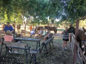 Sundowners during horse feeding time.