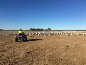 Deon will get you involved in mustering if it's on, plus any number of farm activities that need doing.