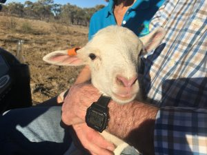 Rossy's found a little mate who couldn't keep up with the mob on the muster.