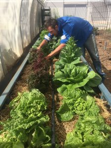 Deon collects fresh produce for lunch from their robust vege garden.